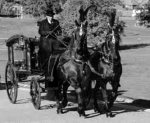 hearse and black horses
