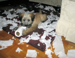Reilly and the toilet paper