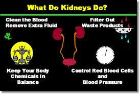 kidney disease | bob's newheart, Human Body